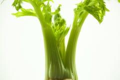 As plantas carnudas, cactos, peônias brancas, plantas da folha são mais zen sobre o fundo branco Imagem de Stock