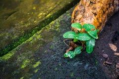 As plantas crescem em assoalhos de madeira Imagens de Stock