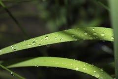 As plantas de jardim estão nos pingos de chuva Fotografia de Stock