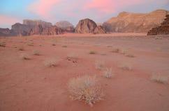 As plantas e as montanhas de deserto lavaram no fulgor do sol de ajuste, Wadi Rum, Jordânia Fotografia de Stock