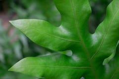 As plantas e o oxigênio vão em conjunto Este tipo de vida vegetal deve ser crescido em áreas naturais em torno de sua casa para d Imagem de Stock