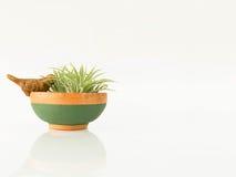As plantas em pasta pequenas Fotografia de Stock
