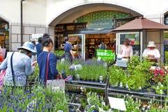 As plantas ervais venderam no mercado erval, Nunobiki Herb Garden na montagem Rokko em Kobe, Japão foto de stock royalty free