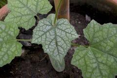 As plantas estão em uns potenciômetros imagem de stock