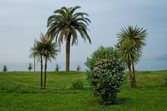 As plantas exóticas no Mar Negro costeiam Batumi em Geórgia Foto de Stock