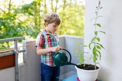 As plantas molhando do menino pré-escolar pequeno ativo da criança com água podem em casa no balcão imagens de stock