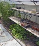 As plantas morrem de uma seca sem água Fotografia de Stock Royalty Free