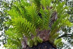 As plantas na floresta tropical imagem de stock