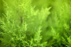 As plantas naturais verdes ajardinam usando-se como o fundo ou o papel de parede foto de stock royalty free