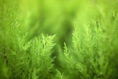 As plantas naturais verdes ajardinam usando-se como o fundo ou o papel de parede imagem de stock royalty free