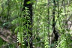 As plantas são como uma árvore de Natal Fotos de Stock
