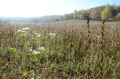 As plantas selvagens florescem no fundo do campo agrícola no outono Foto de Stock