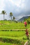 As plantas tropicais em um monte inclinam-se, Indonésia. Fotos de Stock