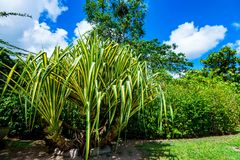 As plantas tropicais verdes luxúrias fecham-se Fotografia de Stock