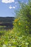 As plantas verdes do riverbank de Green River imagens de stock