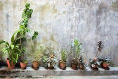As plantas verdes no potenciômetros dentro na parede da granja Imagens de Stock