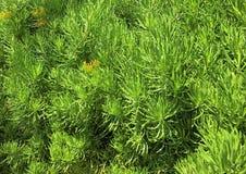 As plantas verdes são reconfortantes aos olhos Fotografia de Stock Royalty Free