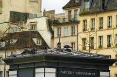 As pombas estão sentando-se em um telhado em Paris fotografia de stock
