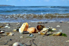 As praias do mar de Azov foto de stock royalty free