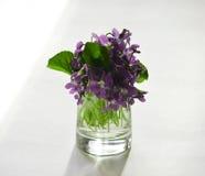 As primeiras flores Fotografia de Stock Royalty Free