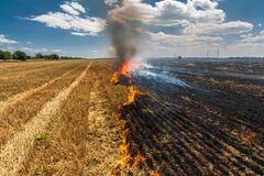 As queimaduras do fogo stubble no campo destroem o verão imagens de stock royalty free