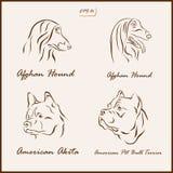 As raças do cão ilustração do vetor