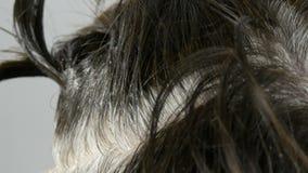 As raizes cinzentas cobertos de vegetação de uma mulher de meia idade que que colore seu cabelo com escova especial Cabelo escuro filme