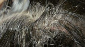 As raizes cinzentas cobertos de vegetação de uma mulher de meia idade que que colore seu cabelo com escova especial Cabelo escuro video estoque