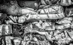 As raizes da árvore brotam pedras cinzentas grandes do throgh imagens de stock