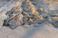 As raizes da árvore brotaram através do asfalto fotografia de stock