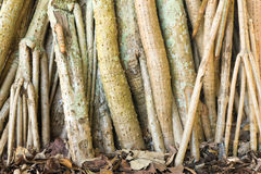As raizes da árvore na folha cobriram a terra Fotografia de Stock Royalty Free