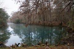 As raizes de árvores de cipreste calvo no peixe-boi saltam o estado P fotos de stock