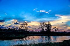 As reflexões da silhueta do por do sol no cipreste inundam Fotografia de Stock