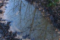 As reflexões das árvores na água estão nas montanhas fotografia de stock royalty free