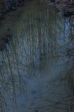As reflexões das árvores na água estão nas montanhas fotos de stock