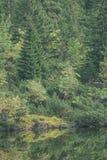 as reflexões das árvores no lago molham na névoa da manhã - vin Fotos de Stock