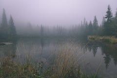 as reflexões das árvores no lago molham na névoa da manhã - vin Imagens de Stock