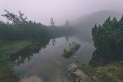as reflexões das árvores no lago molham na névoa da manhã - vin Fotografia de Stock Royalty Free