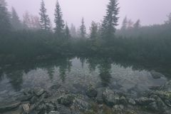 as reflexões das árvores no lago molham na névoa da manhã - vin Imagem de Stock Royalty Free