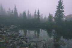 as reflexões das árvores no lago molham na névoa da manhã - vin Imagem de Stock