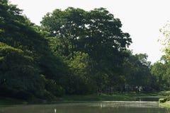 As reflexões serenos, bonitas de um lago surgem em um parque verde, tailandês luxúria Imagem de Stock