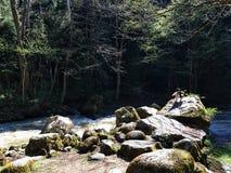 As rochas do rio na floresta Fotos de Stock
