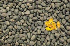 As rochas e os seixos escuros com queda amarela saem Fotos de Stock
