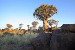 As rochas e tremem árvores na floresta da árvore tremer Fotos de Stock