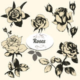 As rosas ajustaram-se Foto de Stock