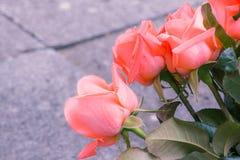 As rosas alaranjadas são as cores especiais que significam o amor para membros da família imagens de stock