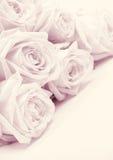 As rosas cor-de-rosa bonitas tonificaram no sepia como o fundo do casamento macio fotos de stock royalty free