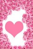 As rosas cor-de-rosa com água deixam cair o miliampère fotos de stock