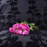 As rosas cor-de-rosa de ontem sairam em um assento preto de veludo imagens de stock royalty free
