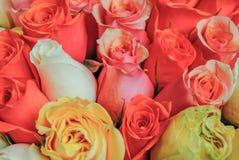 As rosas cor-de-rosa e vermelhas bonitas florescem em uma loja de flor parisiense Imagem de Stock